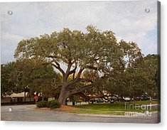 Stop And Rest Acrylic Print by Kay Pickens