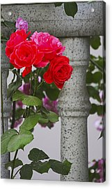 Stop And Smell The Roses Acrylic Print by Yun Qing Fu