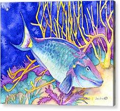 Stoplight Parrotfish Acrylic Print by Pauline Jacobson