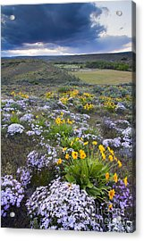 Storm Over Wildflowers Acrylic Print by Mike  Dawson