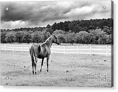 Stormy Pasture Acrylic Print by Scott Hansen