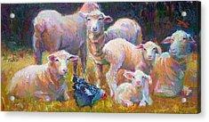 Stranger At The Well - Spring Lambs Sheep And Hen Acrylic Print by Talya Johnson