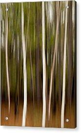 Streaky Trees At Mackenzie King Estate Acrylic Print by Rob Huntley