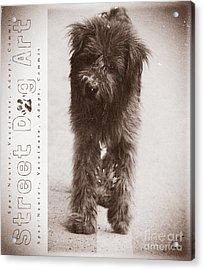 Street Dog Art #7 Acrylic Print by Nola Lee Kelsey