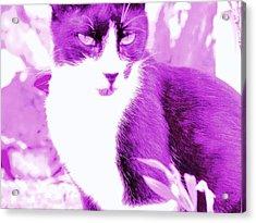 Strike Violet Acrylic Print by Anita Dale Livaditis