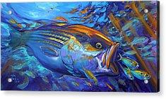 Striper Blitz Acrylic Print by Savlen Art