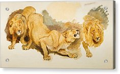 Study For Daniel In The Lions Den Acrylic Print by Briton Riviere
