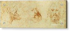Study Of A Male Head Acrylic Print by Leonardo Da Vinci