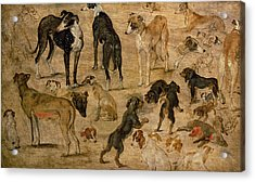 Study Of Hounds, 1616 Acrylic Print by Jan the Elder Brueghel