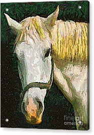 Study Of The Horse's Head Acrylic Print by Dragica  Micki Fortuna