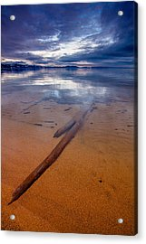 Submerged Log Acrylic Print by Mike Lee