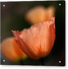 Suenos De Flores Acrylic Print by Joe Schofield
