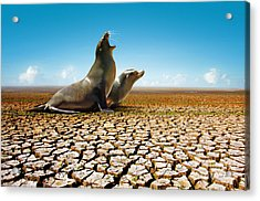 Suffering Seals Acrylic Print by Carlos Caetano
