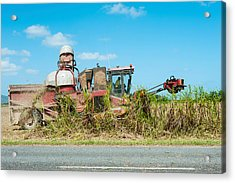 Sugar Cane Being Harvested, Lower Acrylic Print by Panoramic Images