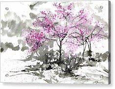 Sumie No.2 Plum Blossoms Acrylic Print by Sumiyo Toribe