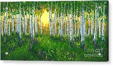Summer Birch 24 X 48 Acrylic Print by Michael Swanson
