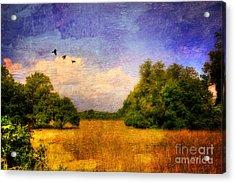 Summer Country Landscape Acrylic Print by Lois Bryan