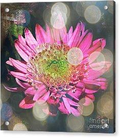 Summer Dreaming Acrylic Print by Carol Groenen