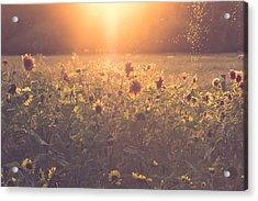 Summer Evening Acrylic Print by Chris Fletcher