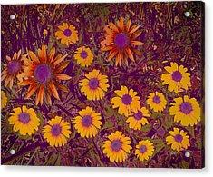 Summer Garden Acrylic Print by Ann Powell