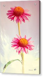 Summer Impressions Cone Flowers Acrylic Print by Bob Orsillo