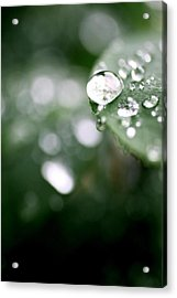 Summer Rain Acrylic Print by AR Annahita