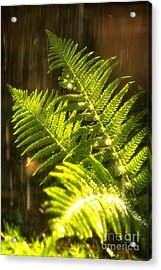 Summer Rain Acrylic Print by Jane Rix