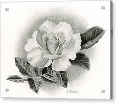 Summer Rose Acrylic Print by Sarah Batalka