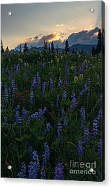 Sunbeams Over Rainier Acrylic Print by Mike  Dawson