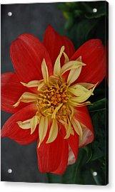 Sunburst Acrylic Print by Carol  Eliassen