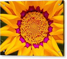 Sunburst Daisy Photograph by Bill Caldwell - ABeautifulSky Photography: fineartamerica.com/featured/sunburst-daisy-bill-caldwell...