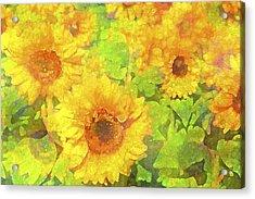 Sunflower 19 Acrylic Print by Pamela Cooper