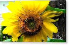 Sunflower Acrylic Print by Brittany Perez