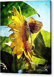 Sunflower Butterfly And Bee Acrylic Print by Andee Design
