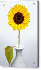 Sunflower Acrylic Print by Dave Bowman