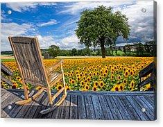 Sunflower Farm Acrylic Print by Debra and Dave Vanderlaan