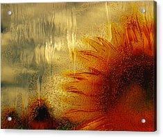 Sunflower In The Rain Acrylic Print by Jack Zulli