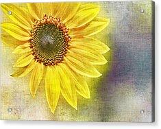 Sunflower Acrylic Print by Penny Pesaturo