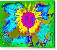 Sunflower Pop Acrylic Print by Ed Weidman