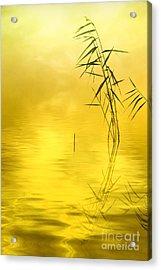 Sunlight Acrylic Print by Veikko Suikkanen