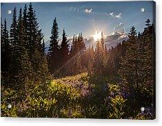 Sunlit Flower Meadows Acrylic Print by Mike Reid