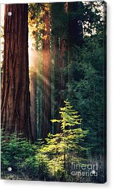 Sunlit From Heaven Acrylic Print by Jane Rix