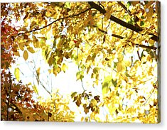 Sunlit Leaves Acrylic Print by Les Cunliffe