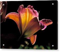 Sunlit Lily Acrylic Print by Rona Black