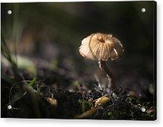 Sunlit Mushroom Acrylic Print by Scott Norris