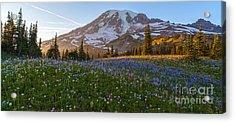 Sunlit Rainier Meadows Acrylic Print by Mike Reid