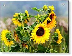 Sunny Meadow Acrylic Print by Jenny Rainbow