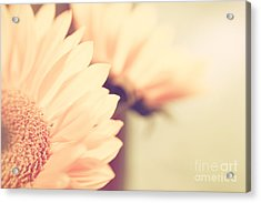 Sunny Side Up Acrylic Print by Lisa McStamp