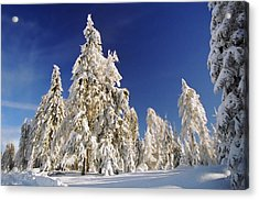 Sunny Winter Day Acrylic Print by Aged Pixel