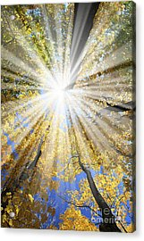 Sunrays In The Forest Acrylic Print by Elena Elisseeva